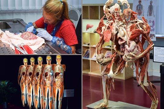 Contemporary Human Anatomy - School of Health Professions ...