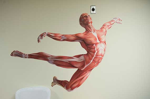Contemporary Human Anatomy, MS - Eastern Virginia Medical School ...