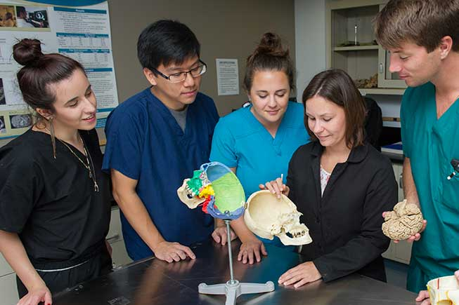 Students gathered around a model of a skull
