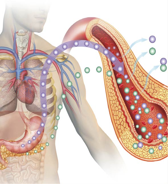 Diabetes System